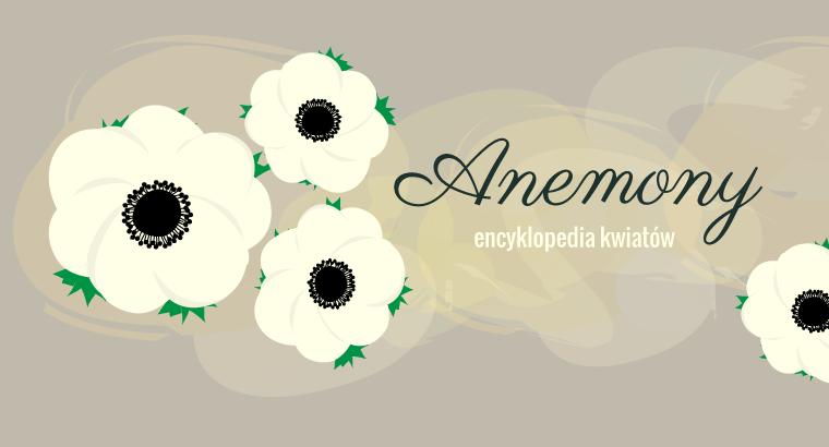 [kwiaty] Anemony
