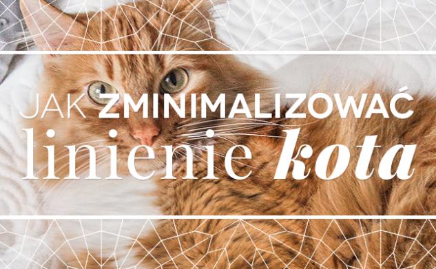 Jak zminimalizować linienie kota