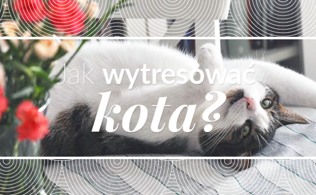 Jak wytresować kota?