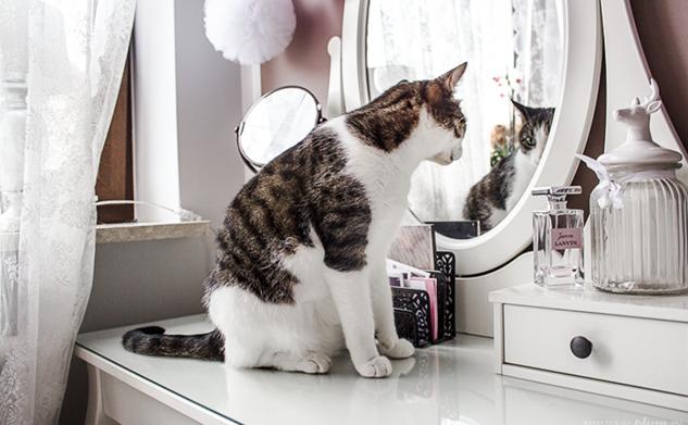 Top 5 kotów instagrama
