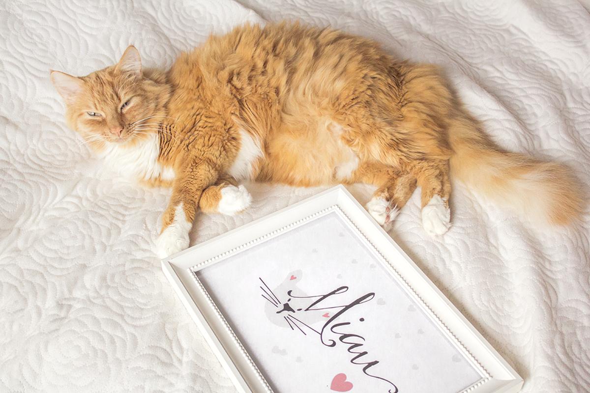 Co koty robią nocą? + plakat dla kociarzy!