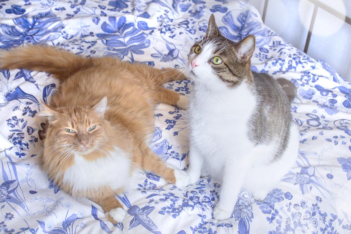 5 ulubionych filmowych kotów
